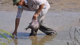UBND tỉnh Quảng Trị chỉ đạo xử lý tình trạng nước ô nhiễm khiến cá chết gần KCN Quán Ngang