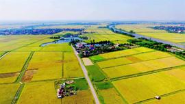 Tổ chức kinh tế nhận chuyển nhượng đất nông nghiệp có những quyền gì?