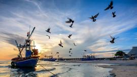 Chuyển đổi và hành động để giải quyết khủng hoảng đại dương