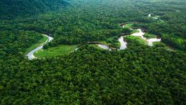 Đảm bảo quyền lợi với các-bon từ rừng cho cộng đồng địa phương