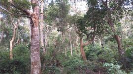 Điện Biên: Nâng cao quyền lợi, nghĩa vụ của bên cung ứng và sử dụng dịch vụ môi trường rừng