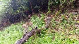 Huế: Thả hàng chục cá thể động vật hoang dã về rừng