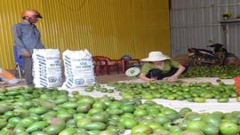 Đắk Nông: Nỗ lực chống dịch, phát triển kinh tế song song với bảo vệ môi trường