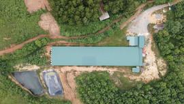 Quảng Bình: Trang trại heo hàng nghìn mét vuông xây dựng trái phép