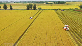 Hà Nội chuyển mục đích sử dụng hơn 25 ha đất trồng lúa