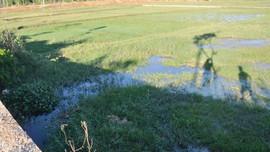 Nghiêm khắc xử phạt hành vi không sử dụng đất nông nghiệp