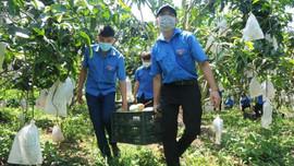 Sơn La: Xây dựng 2 phương án xuất khẩu nông sản ứng phó với dịch Covid-19