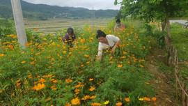 Phụ nữ các dân tộc thiểu số xã Nà Tấu biến bãi rác thành vườn hoa