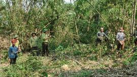 """Thành lập BQL Dự án """"Quản lý rừng bền vững và bảo tồn đa dạng sinh học"""" tỉnh Thanh Hóa"""