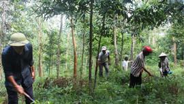 Nà Tấu: Nhiều giải pháp tăng cường công tác quản lý bảo vệ rừng