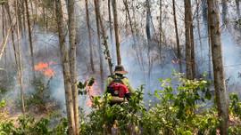 Thừa Thiên Huế: Tăng cường giải pháp phòng cháy, chữa cháy rừng