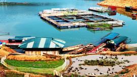Phát triển bền vững vùng lòng hồ Thủy điện Sơn La- Bài 1: Khai thác, nuôi trồng thủy sản gắn với bảo vệ môi trường sinh thái