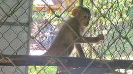 Hà Tĩnh: Người dân tự nguyện giao nộp cá thể động vật quý hiếm