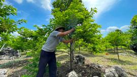 Nho Quan (Ninh Bình): Tận dụng đất hoang đồi núi phát triển kinh tế vùng DTTS