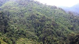 Bát Xát – Lào Cai: Giữ rừng bằng chi trả dịch vụ môi trường rừng