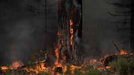 New York cảnh báo về chất lượng không khí do cháy rừng ở Canada