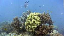 UNESCO quyết định không đưa rạn san hô Great Barrier vào danh sách di sản nguy cấp