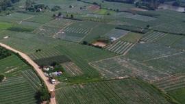 Lạng Sơn: Chỉ đạo công bố công khai quy hoạch sử dụng đất