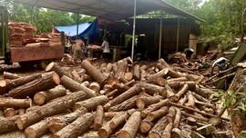 """Hoà An (Cao Bằng): Thiếu hồ sơ pháp lý – Xưởng gỗ bóc vẫn """"ngang nhiên"""" hoạt động"""