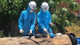 Thừa Thiên Huế: Nước sạch đục ngầu, dân lo lắng