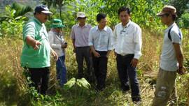 Quảng Ngãi: Chấn chỉnh công tác cập nhật, báo cáo diễn biến rừng