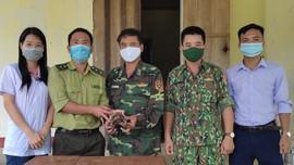 Hà Tĩnh: Vườn Quốc gia Vũ Quang tiếp nhận cá thể rùa Sa Nhân quý hiếm