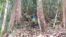 Khu BTTN Mường Nhé: Hiệu quả từ chính sách chi trả dịch vụ môi trường rừng