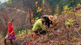Đồng bào Mông ở xã Ngọc Chiến trồng rừng ứng phó BĐKH