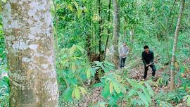 Mường Ảng (Điện Biên): Hiệu quả từ chính sách chi trả dịch vụ môi trường rừng