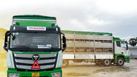Dịch vụ vận chuyển gia súc  của THILOGI hiện đại, hiệu quả và an toàn