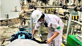 """Công đoàn PVCFC: Đồng hành """"3 tại chỗ"""", duy trì vùng xanh nhà máy"""