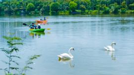 Khu đô thị cách hồ Hoàn Kiếm 14 Km có thiên nga, vịt trời đi lại tự do trên đường