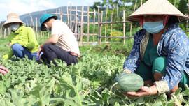 Nghĩa Lộ (Yên Bái): Chuyển đổi cây trồng thích ứng với biến đổi khí hậu