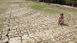Xâm nhập mặn ở Đồng bằng sông Cửu Long đến sớm hơn nhiều năm