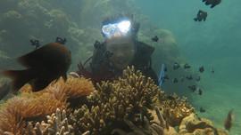 Phục hồi hệ sinh thái rạn san hô tại khu vực biển Quy Nhơn