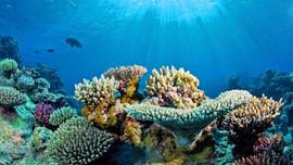 """Bài dự thi """"Cùng giữ màu xanh của biển"""": Công nghệ số giữ """"xanh"""" môi trường biển"""