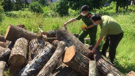 Cao Bằng: Phát hiện, thu giữ 1,8 m³ gỗ tự nhiên không rõ nguồn gốc