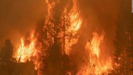 Cháy rừng ở Tây Ban Nha thiêu rụi 1.000 ha rừng