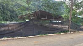 Thạch An (Cao Bằng): Yêu cầu khắc phục triệt để ô nhiễm nguồn nước do trại nuôi trâu xả thải