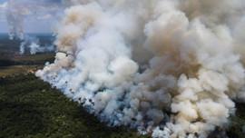Nạn phá rừng Amazon ở Brazil giảm tháng thứ hai, nhưng vẫn ở mức cao