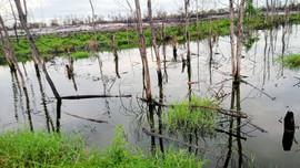 Vụ cá chết trong KCN:  C.P Việt Nam - Chi nhánh Thừa Thiên Huế  giải trình việc xả thải vượt quy chuẩn môi trường