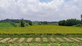Chuyển mục đích sử dụng đất trên địa bàn tỉnh Long An