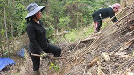 Quảng Nam: Người Cơ Tu ở Tây Giang trồng rừng ứng phó biến đổi khí hậu