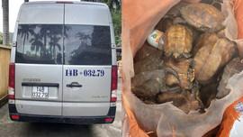 Quảng Ninh: Tạm giữ xe khách vận chuyển 34 cá thể rùa quý hiếm
