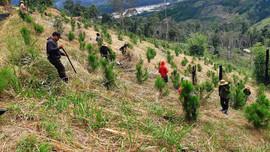 Gia Lai: Ngát xanh những cánh rừng vừa phát triển kinh tế vừa ứng phó với biến đổi khí hậu