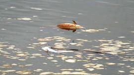 Quảng Ngãi: Cá, vịt chết bất thường trên sông Hầm Giang do doanh nghiệp xả thải?