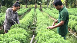 Giáo dân Chợ Lách (Bến Tre): Linh hoạt bảo vệ môi trường, phòng chống hạn mặn