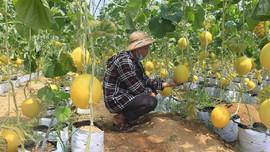 Thanh Hoá: Cải thiện và nâng cao chất lượng môi trường, giữ gìn cảnh quan nông thôn