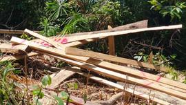 Vụ rừng phòng hộ bị đốn hạ ở Trà Bui: Lãnh đạo tỉnh Quảng Nam yêu cầu xử lý nghiêm