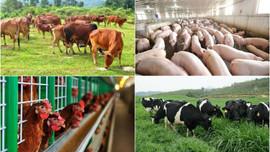 Chăn nuôi gia súc quy mô lớn có phải lập Báo cáo đánh giá tác động môi trường không?